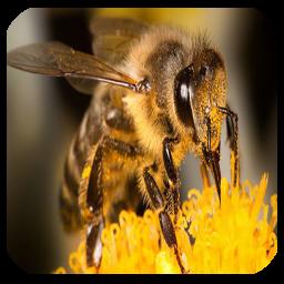 آموزش پرورش زنبور عسل ویژه