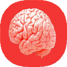 نکات آناتومی مغز و اعصاب