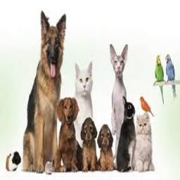 آموزش و نگهداری حیوانات خانگی