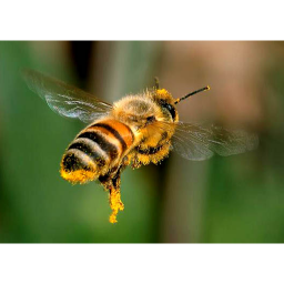ترفندهای زنبورداری